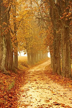 Autumn-autumn-colours-brown-countryside-358238.jpg
