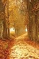 Autumn-autumn-colours-brown-countryside-358238.jpg