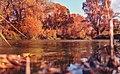 Autumn 3 Jpg (126207077).jpeg