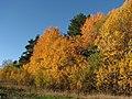 Autumn in Danderyd-2 (37935938612).jpg