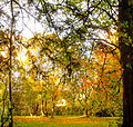 Autumn scene at Woodleigh (1 of 7).jpg