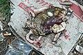 Avdiivka fish guts.jpg