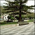 Avenida Luísa Todi, Setúbal, Portugal (3379466386).jpg