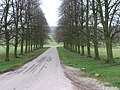 Avenue in Chatsworth Park - geograph.org.uk - 1248188.jpg