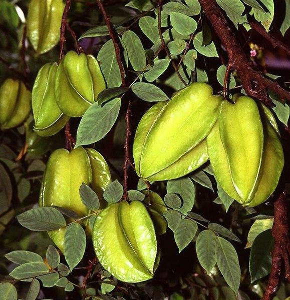 fruit du carambolier