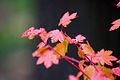 BLM Botany 07 (6871305961) (2).jpg