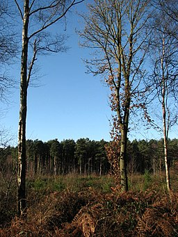 Bacton Woods - geograph.org.uk - 650259