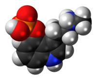Space-filling model of the baeocystin molecule as a zwitterion