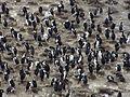 Bahía Ushuaia 282.JPG