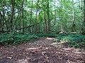 Balade en Forêt de Verrières le 20 août 2017 - 041.jpg