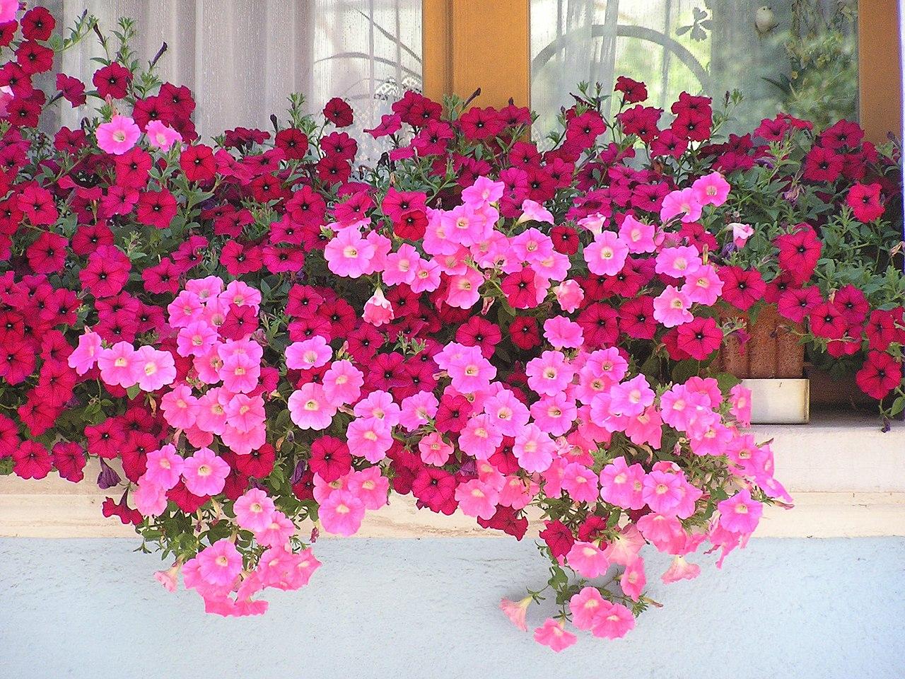 jardiniere de balcon