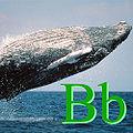 Balina için B.jpg