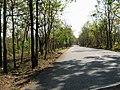 Bandipur Tiger Reserve - panoramio (20).jpg
