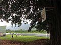 Banyan hoop (8701273648).jpg