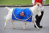 Baptiste the Goat