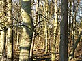 Bare Trees - geograph.org.uk - 330505.jpg