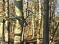 Bare Trees - geograph.org.uk - 330505.jpg
