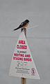 Barn swallow on sign (6316869832).jpg