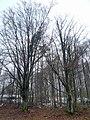 Baumgruppe bei Stangenroth.jpg