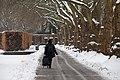 Baumreihe und Weg Zoo KA DSC 6567.jpg