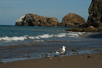Channel Islands (California) - Beach of Santa Cruz Island