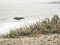 Beach Fringe, Sutro Baths, San Francisco (34866011583).jpg