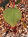 Beautiful leaf with water droplets.jpg