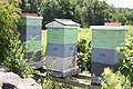 Bee Hives of Tower Hill Botanical Garden - panoramio.jpg