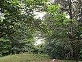 Belmont (Gari Melchers Home) - grounds.jpg