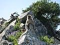 Berberaffen Gibraltar 08.jpg
