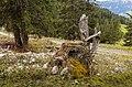 Bergtocht van Tschiertschen (1350 meter) via Ruchtobel richting Ochsenalp 013.jpg