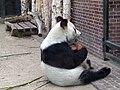Berliner Zoo Bao-Bao 3.jpg