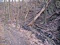 Bezejmenný potok mezi Bohnicemi a Podhořím a jeho okolí (04).jpg