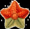 Bio barnstar4.png
