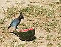 Bird Picnic (2655475006).jpg