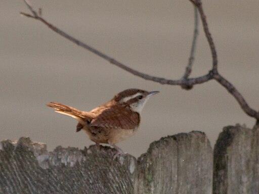 Bird fence 2246