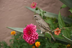 Bird on flower-stem.JPG