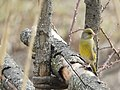 Bird yellow.jpg