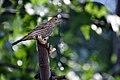 Birds (4822846772).jpg