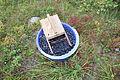 Blåbærbøtte med treplukker.JPG