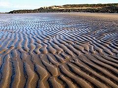 Black Rocks and Beach, Gullane Bay - geograph.org.uk - 343229.jpg