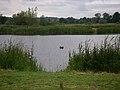 Black Swan - geograph.org.uk - 1375062.jpg