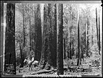 Blackbutt Forest, North Coast (4903263259).jpg