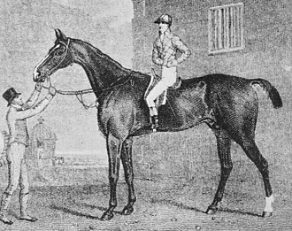 Blacklock (horse) - Engraving of Blacklock