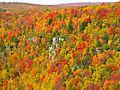 Blackwater-canyon-fall-colors - West Virginia - ForestWander.jpg
