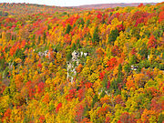 Blackwater-canyon-fall-colors - West Virginia - ForestWander