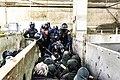 Blocage d'abattoir par le collectif 269 libération animale.jpg