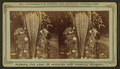 Blossom of the date tree, from Robert N. Dennis collection of stereoscopic views.png