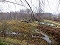 Bog between the old railway lines - March 2013 - panoramio.jpg