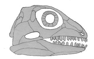 <i>Bolosaurus</i> genus of reptiles (fossil)